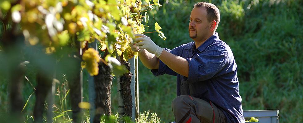 La Lettre des Professionnels du vin et de la vigne